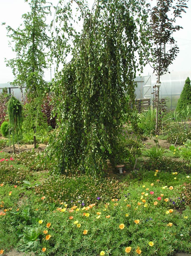 Htt eurogarden su растения открытого грунта