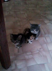 Отдам добрых котят в добрые руки!Здоровые, ласковые, К еде неприхотливы!