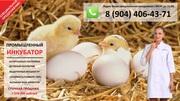 Инкубатор для выведения и продажи цыплят.